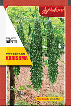 Bitter Gourd Karishma