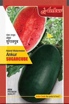 Watermelon Sugarcube